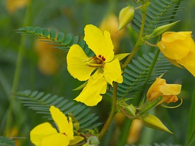 Photograph - Yellow Wildflower 2 by Nick Kirby