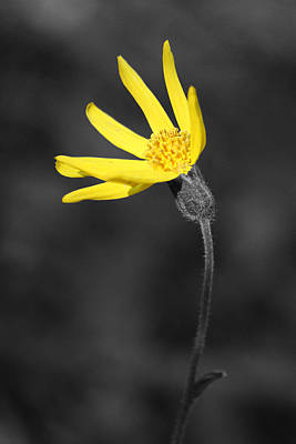 Dark Photograph - Yellow Wildflower by Shane Bechler