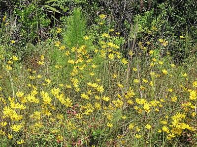 Yellow Wildflowers Print by Zina Stromberg