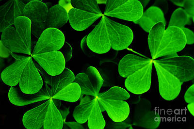 Yellow Wood Sorrel Art Print by Thomas R Fletcher