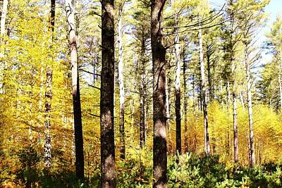 Photograph - Yellow Woodlands by CJ Rhilinger