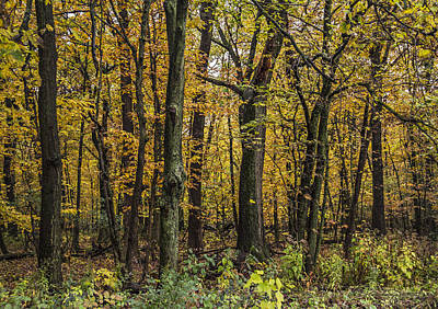 Photograph - Yellow Woods On A Rainy Day by Karen Casey-Smith