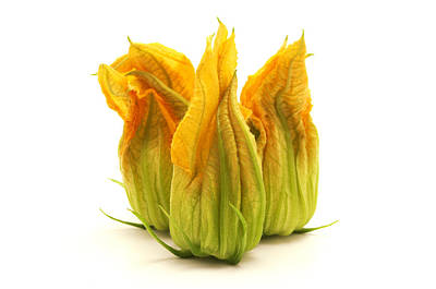 Photograph - Yellow Zucchini Flower by Fabrizio Troiani