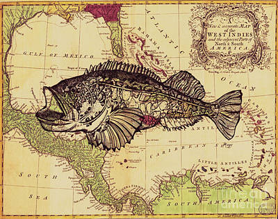 Recently Sold - Animals Drawings - Yellowfin Grouper on Vintage Map by Dawn Rosendahl