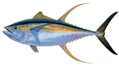 Wahoo Painting - Yellowfin Tuna by Carey Chen