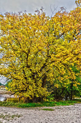 Fort Collins Photograph - Yellows by Baywest Imaging