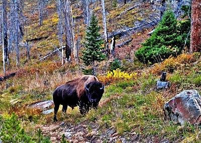 Photograph - Yellowstone Bison by Benjamin Yeager