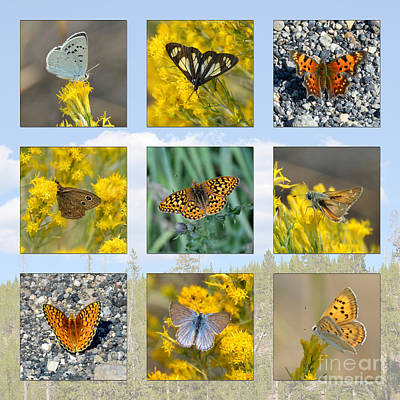 Photograph - Yellowstone Butterflies Collage by Debra Thompson