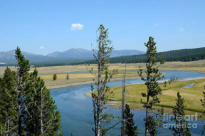 Photograph - Yellowstone Curvy River And Trees by Debra Thompson