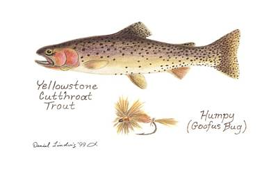 Animals Drawings - Yellowstone Cutthroat Trout and Humpy or Goofus Bug Fly by Daniel Lindvig