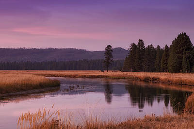 Wood Photograph - Yellowstone Evening by Andrew Soundarajan