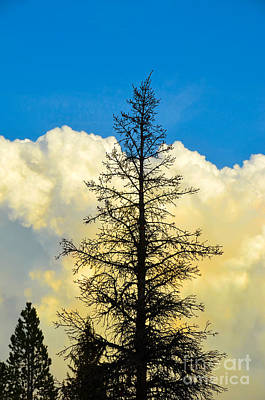 Photograph - Yellowstone Billowing Clouds by Debra Thompson