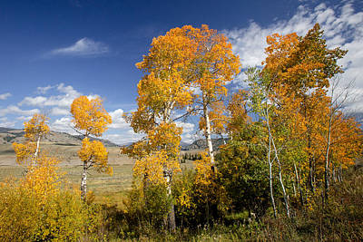Photograph - Yellowstone Gold by Jack Bell