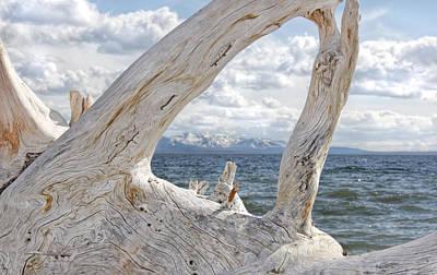 Photograph - Yellowstone Lake Driftwood by Jennie Marie Schell