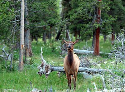 Photograph - Yellowstone Moments 06 by Ausra Huntington nee Paulauskaite