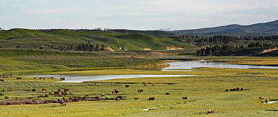 Yellowstone River In Hayden Valley In Yellowstone National Park Art Print