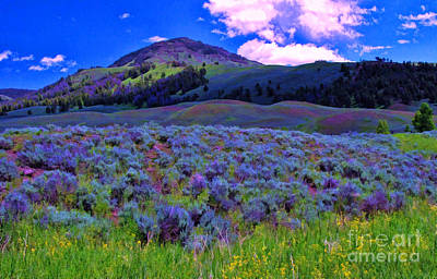 Photograph - Yellowstone Wildflowers 1 by Allen Beatty