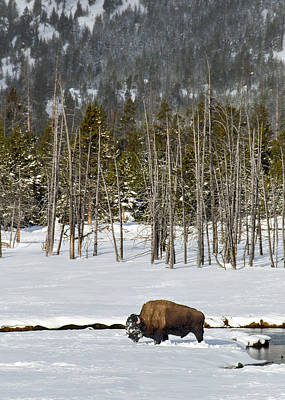 Photograph - Yellowstone Winter by Alan Toepfer