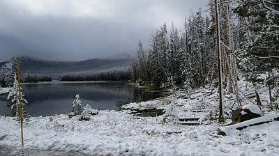 Yellowstone Winter Art Print by Diane Mitchell
