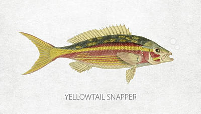 Fish Species Digital Art - Yellowtail Snapper by Aged Pixel