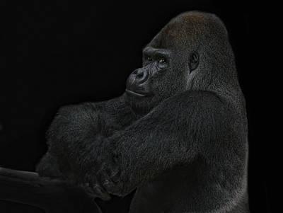 Gorilla Photograph - yes I m the great pretender by Joachim G Pinkawa
