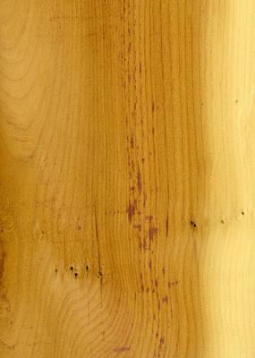 Wood Photograph - Yewtree Veneer by Hakon Soreide