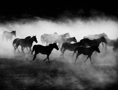 Wild Horses Photograph - Yilki by Sinem Erdogan