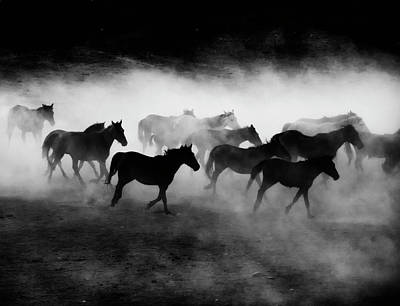 Wild Horse Photographs | Fine Art America