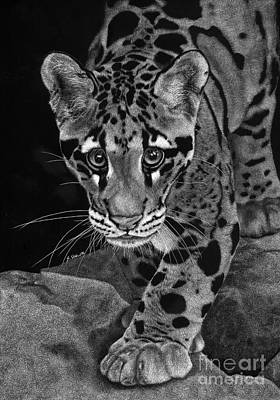 Leopard Drawing - Yim - The Clouded Leopard by Sheryl Unwin