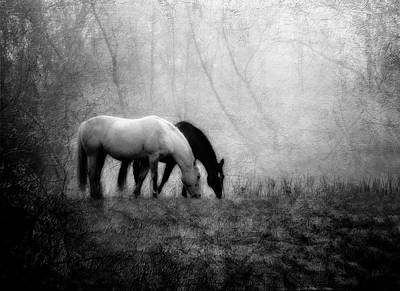 Palomino Photograph - Yin And Yang by Leslie Heemsbergen