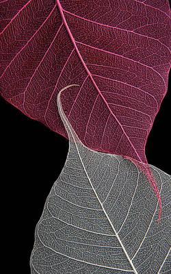 Yin-yang  Art Print by Maggie Terlecki