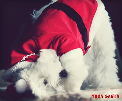 Maltese Dog Christmas Cards Wall Art - Photograph - Yoga Santa by Melanie Lankford Photography