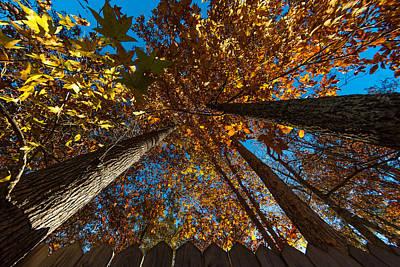 Photograph - Yonder Sky by Gene Hilton
