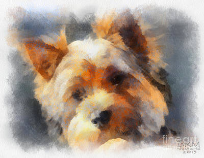 Yorkie Love Art Print by Barbara R MacPhail