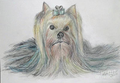 Drawing - Yorkie by Lyric Lucas
