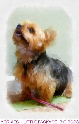 Terrier Digital Art - Yorkie Poster by Betsy Cotton