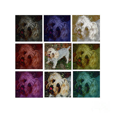 Photograph - Yorkie Poster by Lesa Fine
