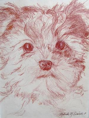 Yorkshire Terrier Drawings Fine Art America