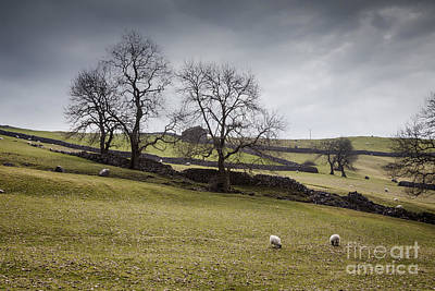 Photograph - Yorkshire Dales Early Spring by Colin and Linda McKie