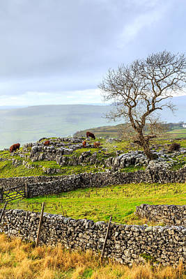 Photograph - Yorkshire Dales by Susan Leonard