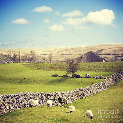 In A Row Photograph - Yorkshire Dales With Dry Stone Wall by Colin and Linda McKie