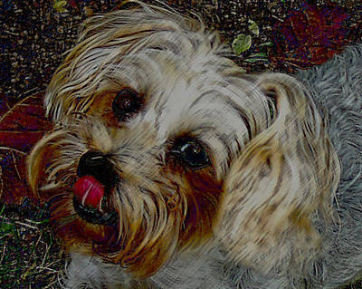 Photograph - Yorkshire Terrier Artwork by Lesa Fine