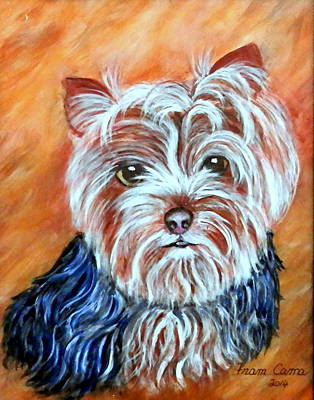 Painting - Yorkshire Terrier by Fram Cama