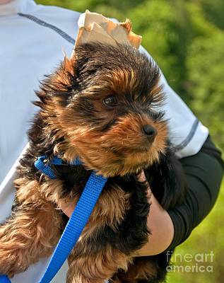 Photograph - Yorkshire Terrier Puppy Being Held By Child by Valerie Garner