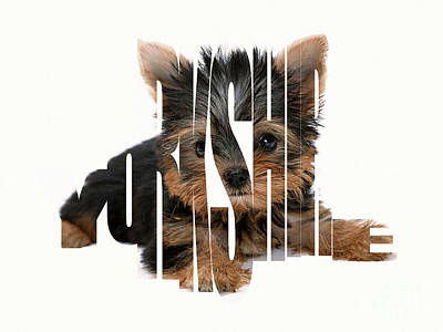 Yorkshire Terrier Puppy Mixed Media - Yorkshire Terrier Typography by Marvin Blaine