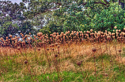 Photograph - Yorktown Onion Field by Jerry Gammon