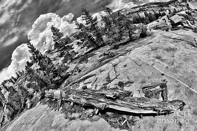 Photograph - Yosemite Fallen Tree by Blake Richards