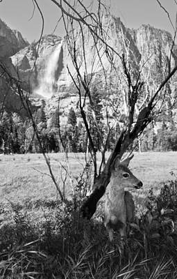 Yosemite Falls And Fawn Art Print