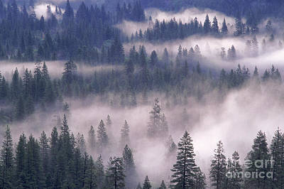 Photograph - Yosemite Fog by George Ranalli