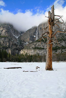 Yosemite In The Dead Of Winter Art Print by Patricia Sanders